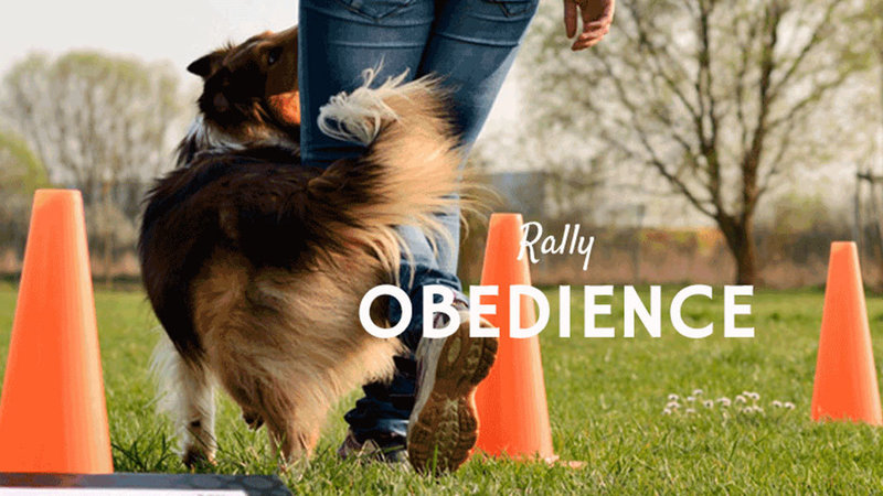 Petition · Revise the AKC Rally Championship title