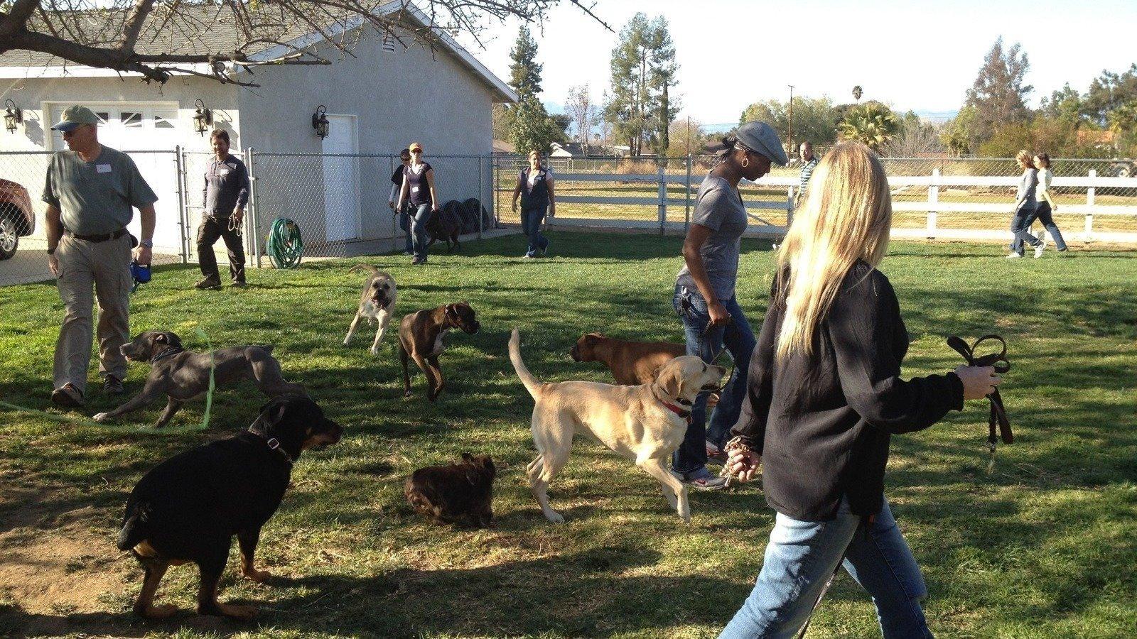 Dog Park Lubbock
