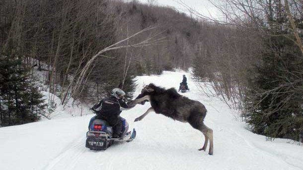 Petition Ban Snowmobiling In Yellowstone National Park Change Org