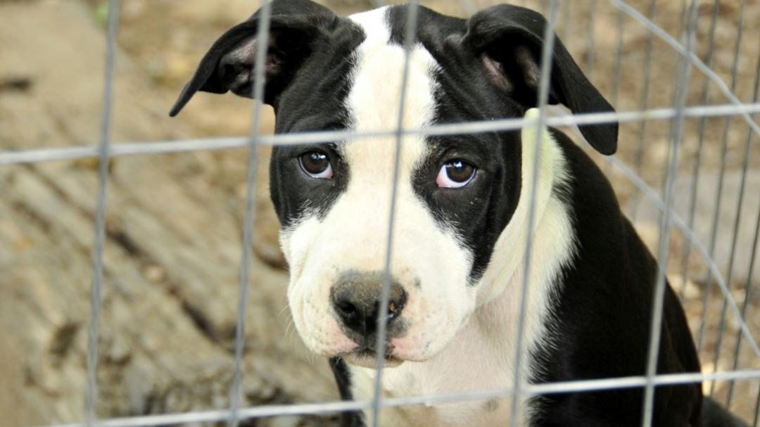 Topic · Animal protection · Change org