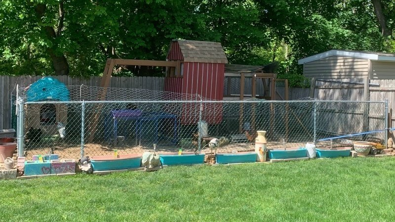 Petition · Town of babylon code for keeping chickens as pets