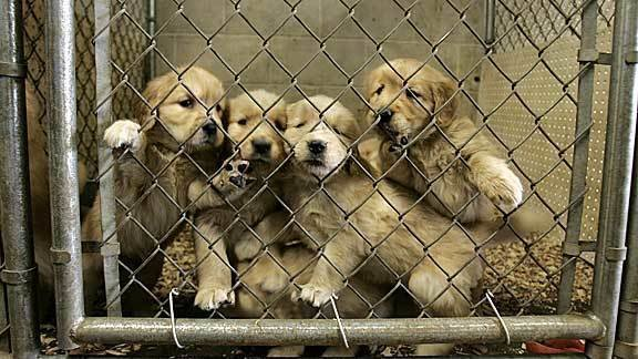 Petition · National : Shut down Petland & stop puppy mills