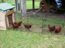 APPROVE Backyard Chicken Keeping Ordinance In North Providence RI
