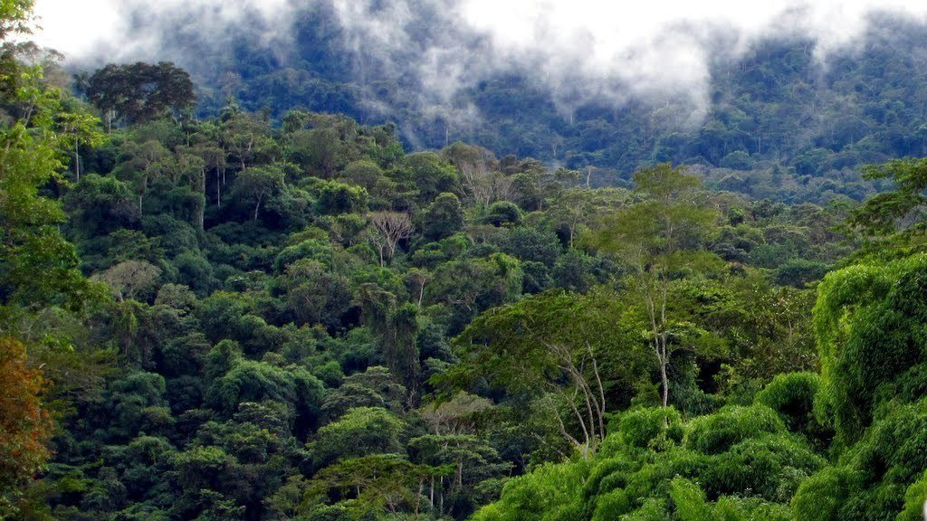 essays on deforestation of the amazon Have to write a deforestation essay do not know how to structure it and what to talk about read this sample and get some ideas of what to dwell upon in your piece.