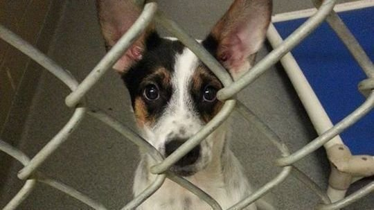 Petition 183 Improve Conditions For Animals In The Care Of
