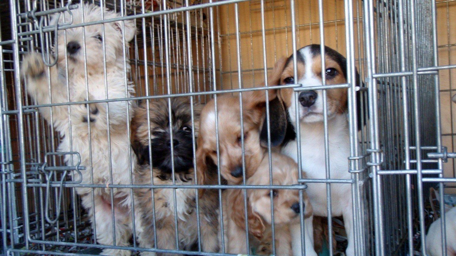Petition 183 North Carolina State Senate North Carolina