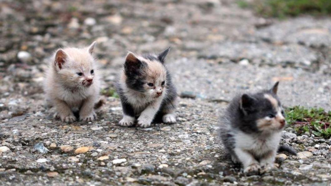 Petición El Ayuntamiento De Getxo Quiere Dejar Morir De Hambre A Los Gatos Change Org