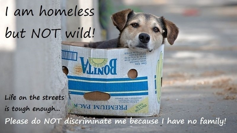 """Pétition · Reject the proposal contained in the draft of the 'EU Animal  Health Law' that defines stray domestic animals as """"wild animals"""" ·  Change.org"""