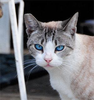 cat door outdoor