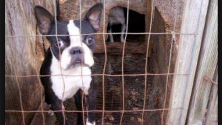 Petition Craigslist Craigslist Stop Allowing Puppy Millbackyard
