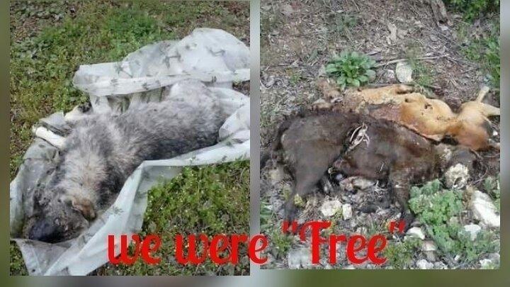 Petition · Facebook,Craigslist,Gumtree: Ban free pets ...
