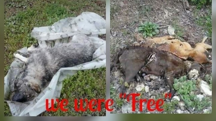Petition · Facebook,Craigslist,Gumtree: Ban free pets online