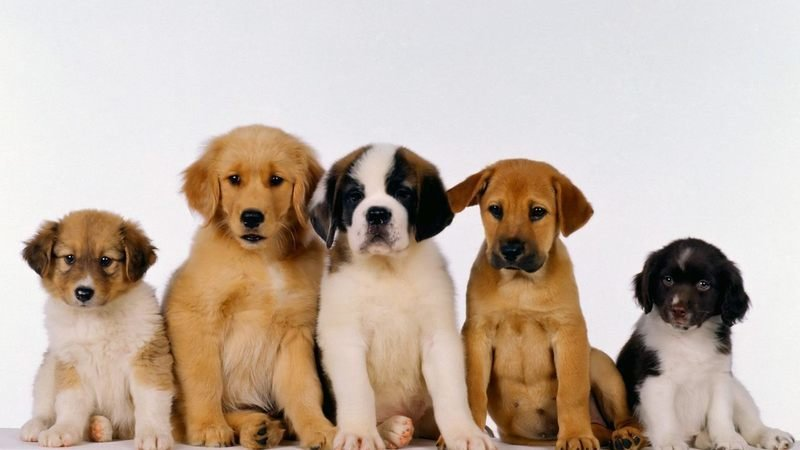 Petition · Make it compulsory for dog breeders to hold a license and