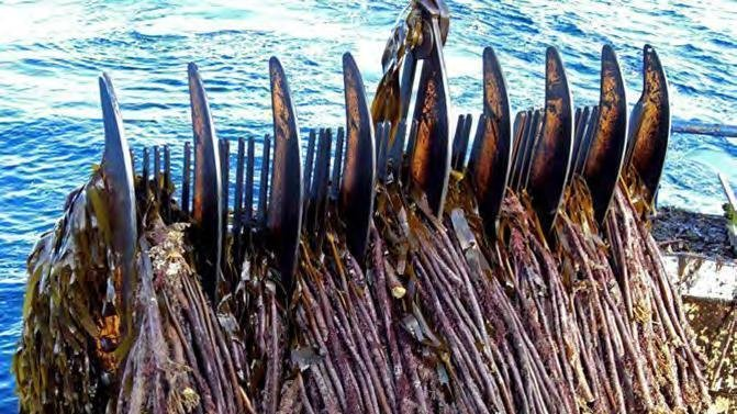 Petition · Do not allow mechanical kelp dredging in Scottish