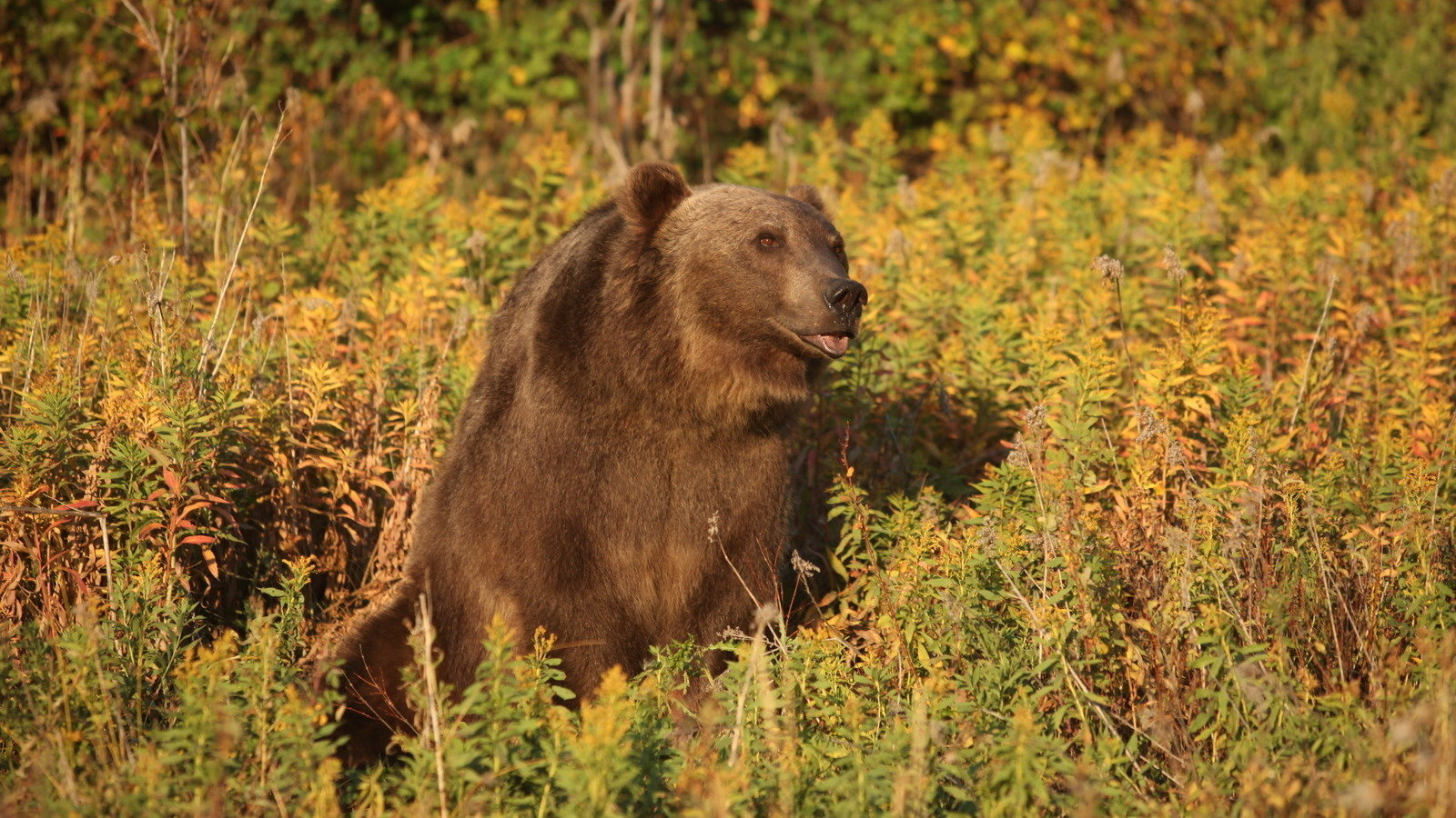 Petition Montana Fish Wildlife And Parks Stop The