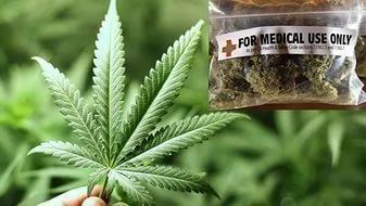 За легализацию марихуаны в россии петиция глицин и марихуана