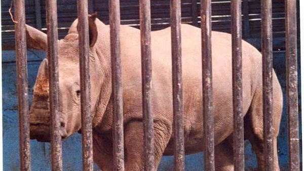 Petition · World Wildlife Fund: SMALL LIVING SPACE FOR ZOO AND ...