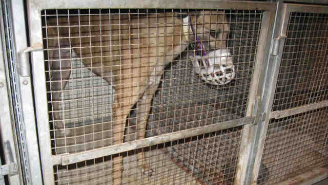 the greyhound tragedy
