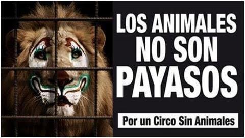 Resultado de imagen para circos sin animales