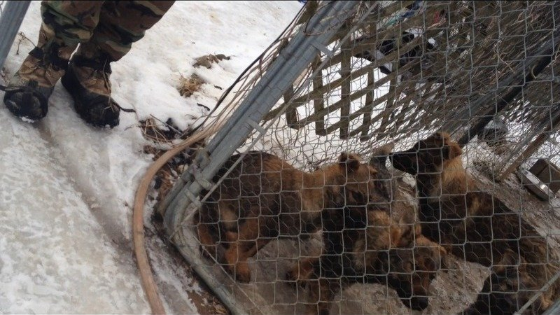 Petition Shut Down Puppy Mill In Spencer County Ky Be The
