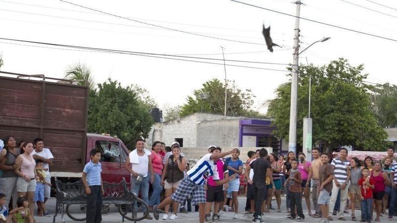 petition president of mexico enrique peña nieto create an animal
