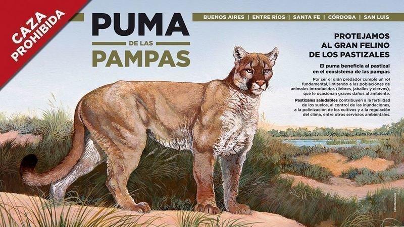 7520a237d4aee Petition update · LA CAZA DEL PUMA ESTA PROHIBIDA EN LAS PROVINCIAS ...