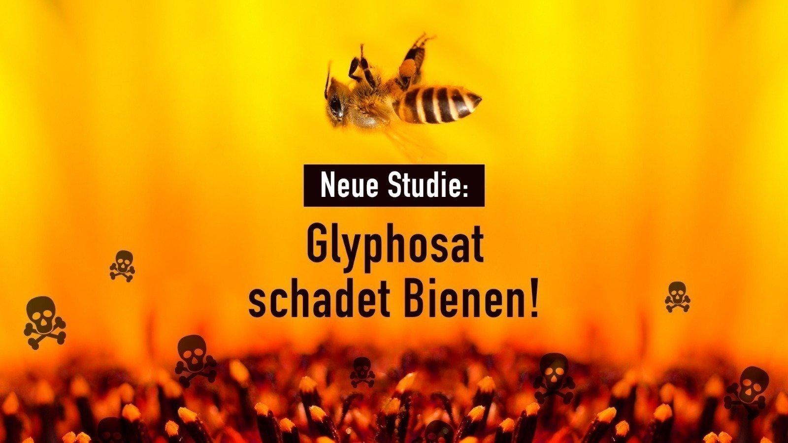Neue wichtige Petition zum Bienensterben: Glyphosat schadet Bienen - das Herbizid muss vom Acker!