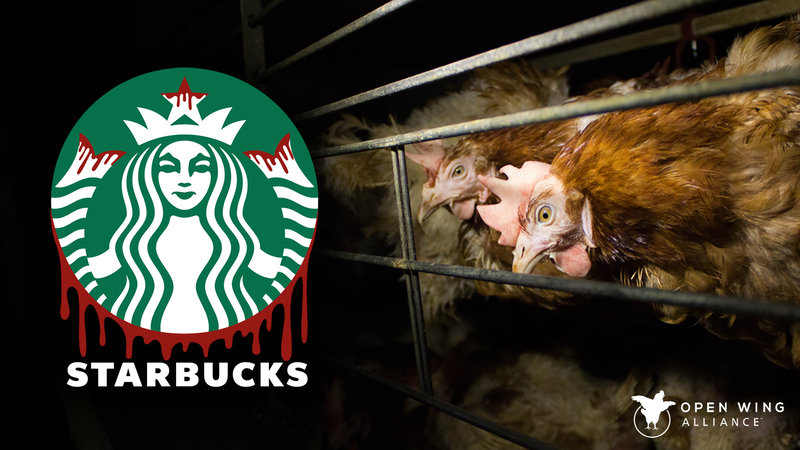 Petition · Starbucks: Stop Supporting Chicken Abuse! · Change org