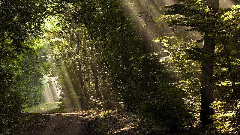 Aux arbres citoyens ! Aidez les forestiers à défendre vos forêts XIdidwCLVPJlyPA-800x450-noPad