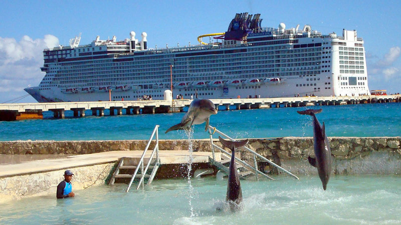 Petition 183 Tell Royal Caribbean Amp Carnival To Stop Selling Dolphin Excursions 183 Change Org