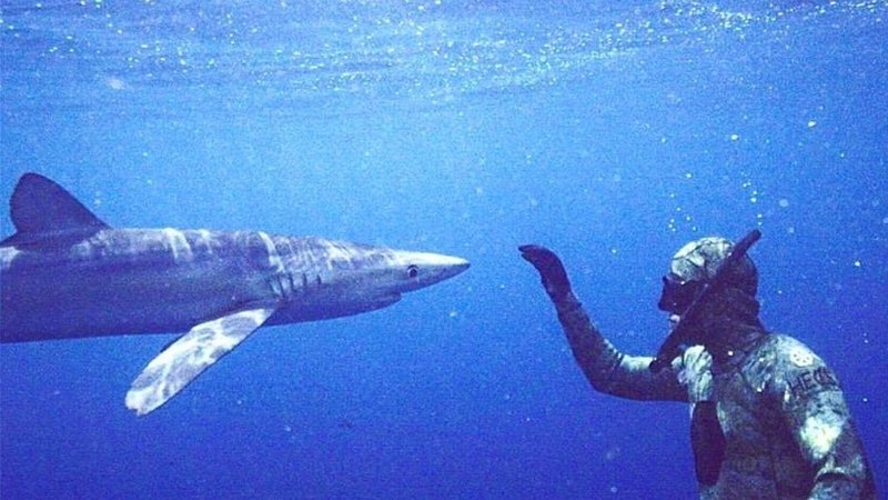 Diver Killed By Tiger Shark At Cocos Island