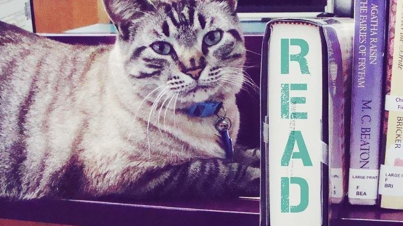 Petition · Mayor Ron White : Please help Browser the library cat