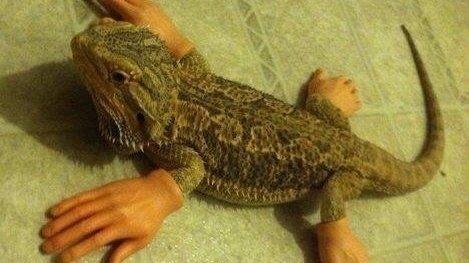 Z Man Lizard Petition · Add...