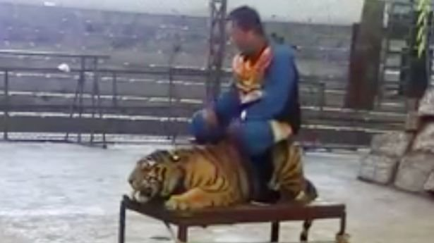 LiveLeak Gallery: Petition · Http://www.liveleak.com/the Abuse Of Taunting