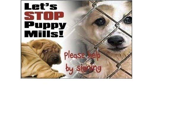 Not Needing Breeding License For Dogs