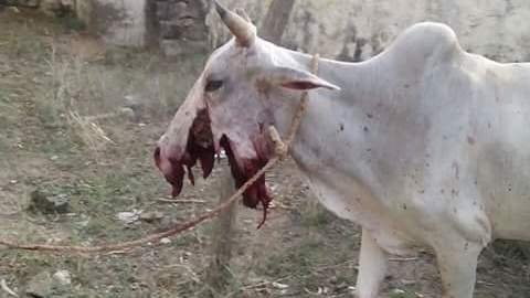 Petition 183 He President Of India Barbed Wire Killing