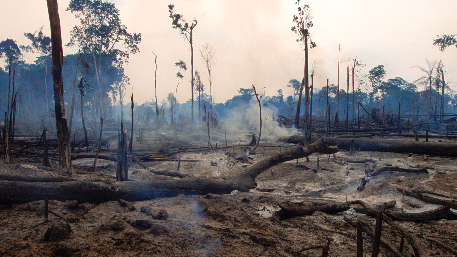 Petition · COP21: Stop deforestation of the Amazon ...