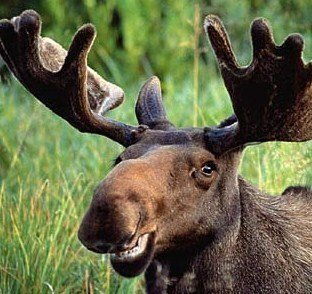 Petition English Language Make Meese The Official Word For