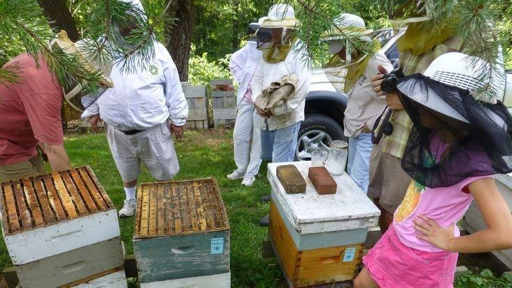 Wonderful Make Backyard Beekeeping Legal In Springville! Great Ideas