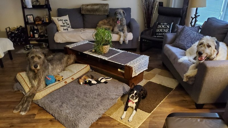 All About Fort Lauderdale Dog Sitting