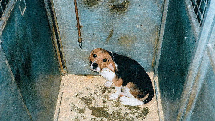 petition  u00b7 refuse east yorkshire beagle farm expansion