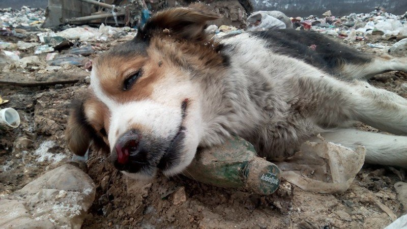 Petition 183 Bosnia Law Against Animal Cruelty In Bosnia