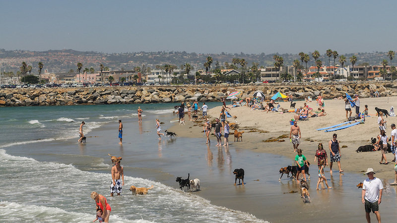 Responsible Dog Owners Want A Designated Off Leash Beach In Los Angeles Ca
