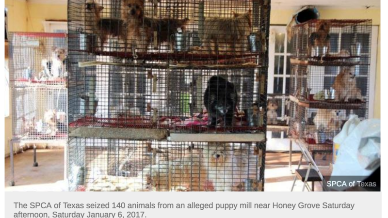 Petition · DEMAND BETTER ANIMAL WELFARE LAWS IN TEXAS