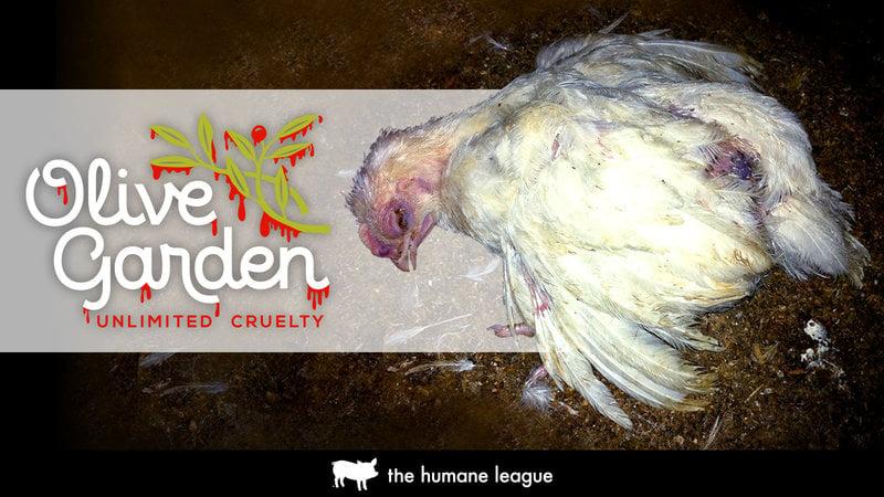 demand better from your chicken suppliers - Olive Garden Medford