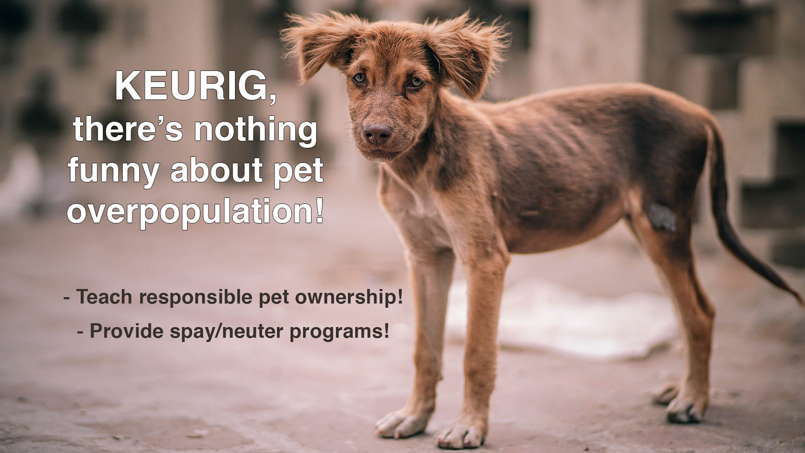 pet overpopulation Each year in oklahoma, tens of thousands of healthy, adoptable animals are destroyed although great progress has been made, fewer than half of the animals that enter the tulsa animal welfare shelter each year will leave there alive.