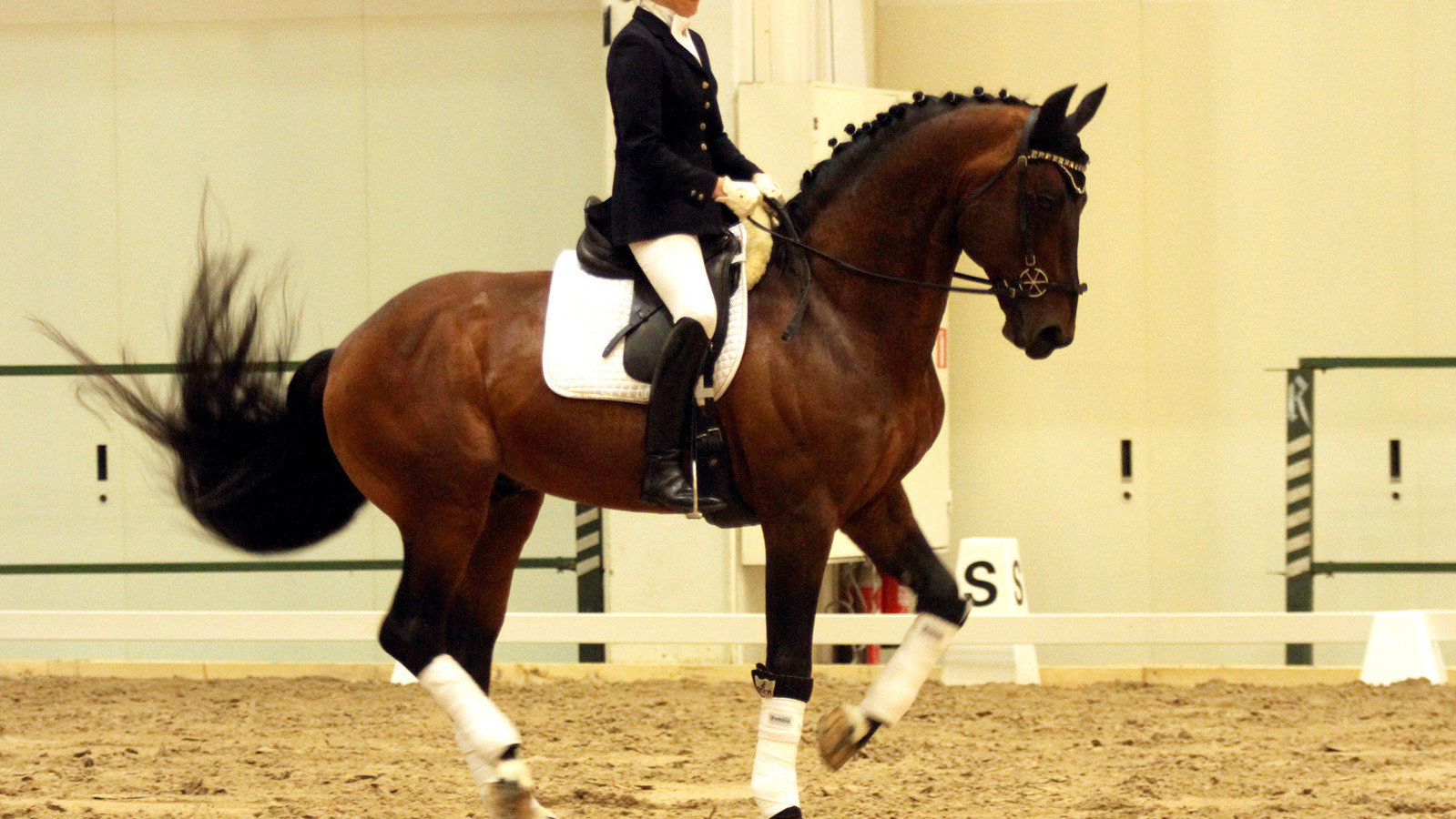 Petition 183 British Dressage British Horse Society