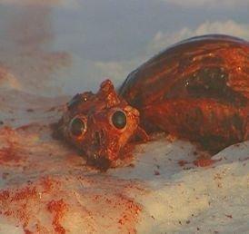 Petition 183 Canada Stop Killing Baby Seals Eu Ban Fur