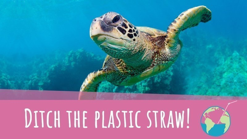 Image result for plastic straw ban