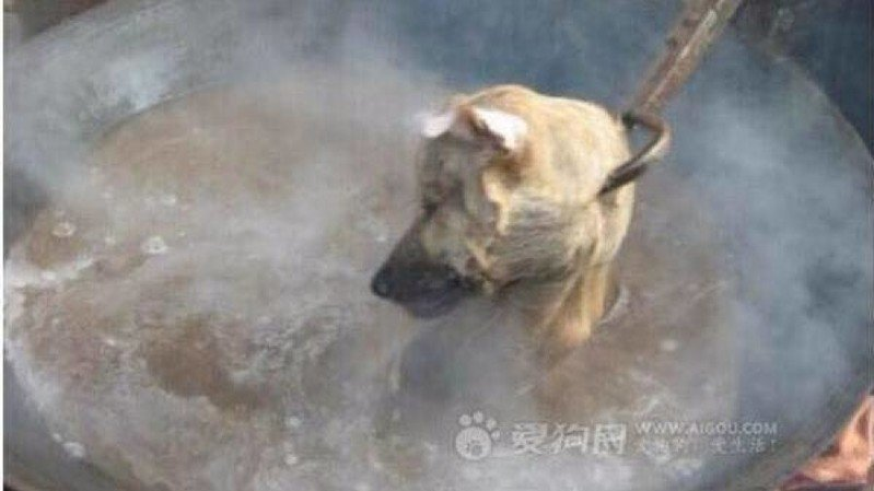 Yulin Dog Meat Festival 2020.Petition Stop The Yulin Dog Meat Eating Festival Change Org
